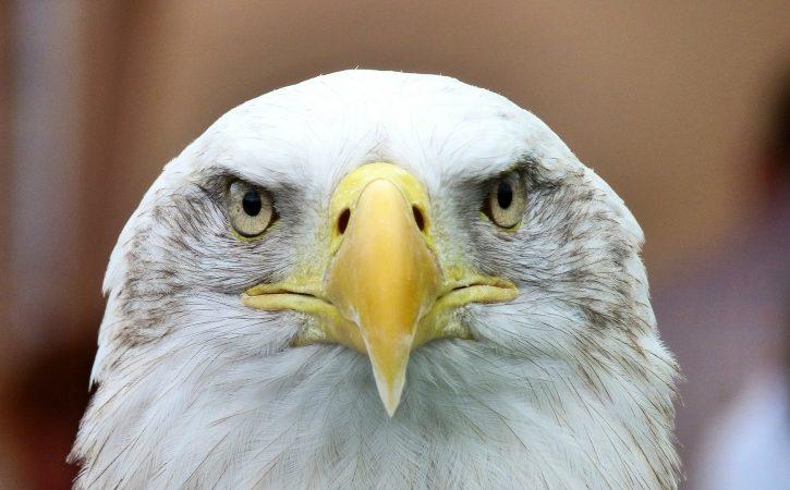 face-aigle-irrefragablement