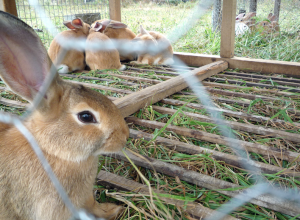 lapins-rejete-ostracisme