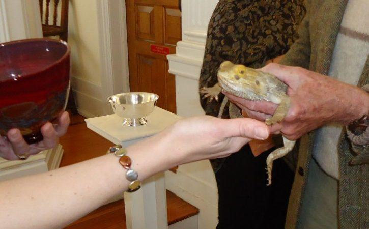 lezard-beni-eglise-vaticination