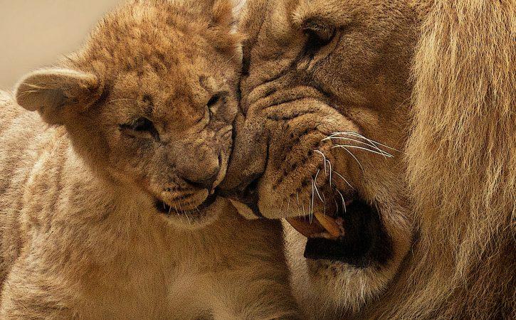 lion-fils-pouvoir-discretionnaire