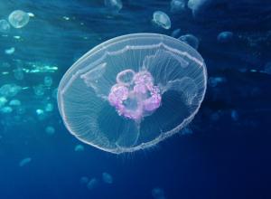meduse-vide-vacuite