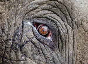oeil-elephant-rides-blet