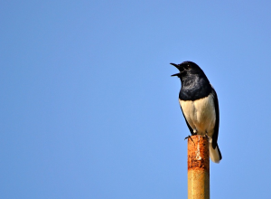 oiseau-chante-soliloquer