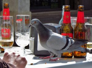 oiseau-pigeon-table-biere-pepie