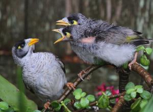 oiseaux-crient-morigener
