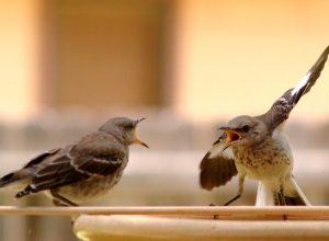 oiseaux-discutent-logorrhee