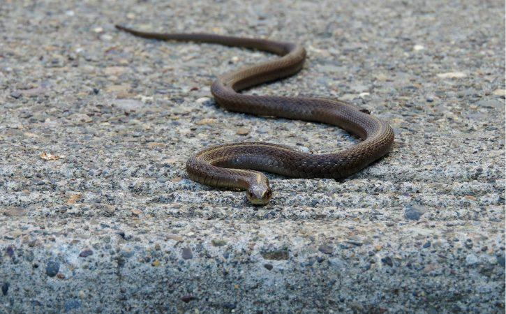 serpent-zig-zag-louvoyer