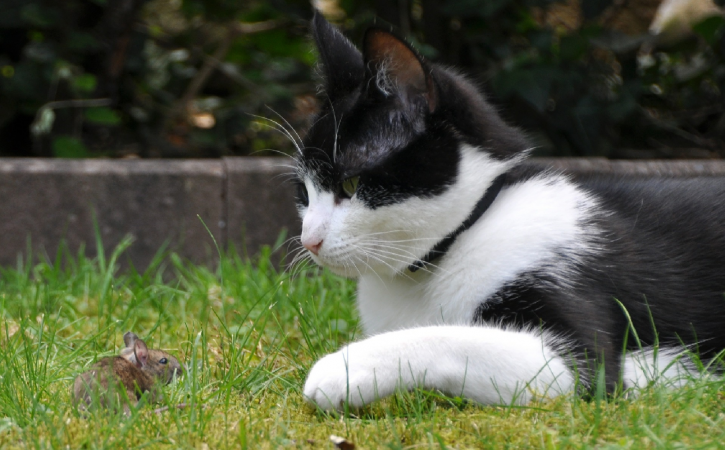 souris-chat-outrecuidance