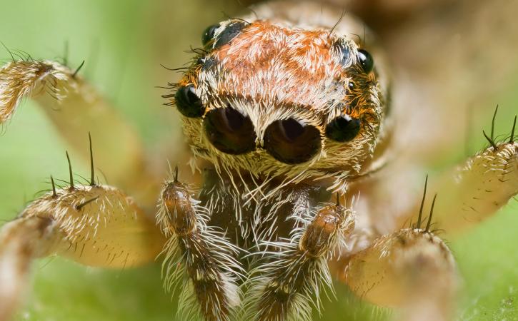 tete-araignee-monstrueuse-teratologie