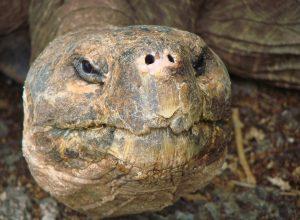tortue-vieille-tete-obsolescence